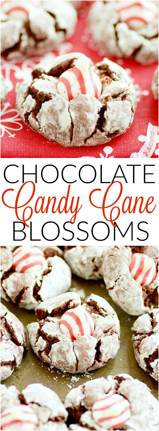 Chocolate Crinkle Candy Cane Cookies