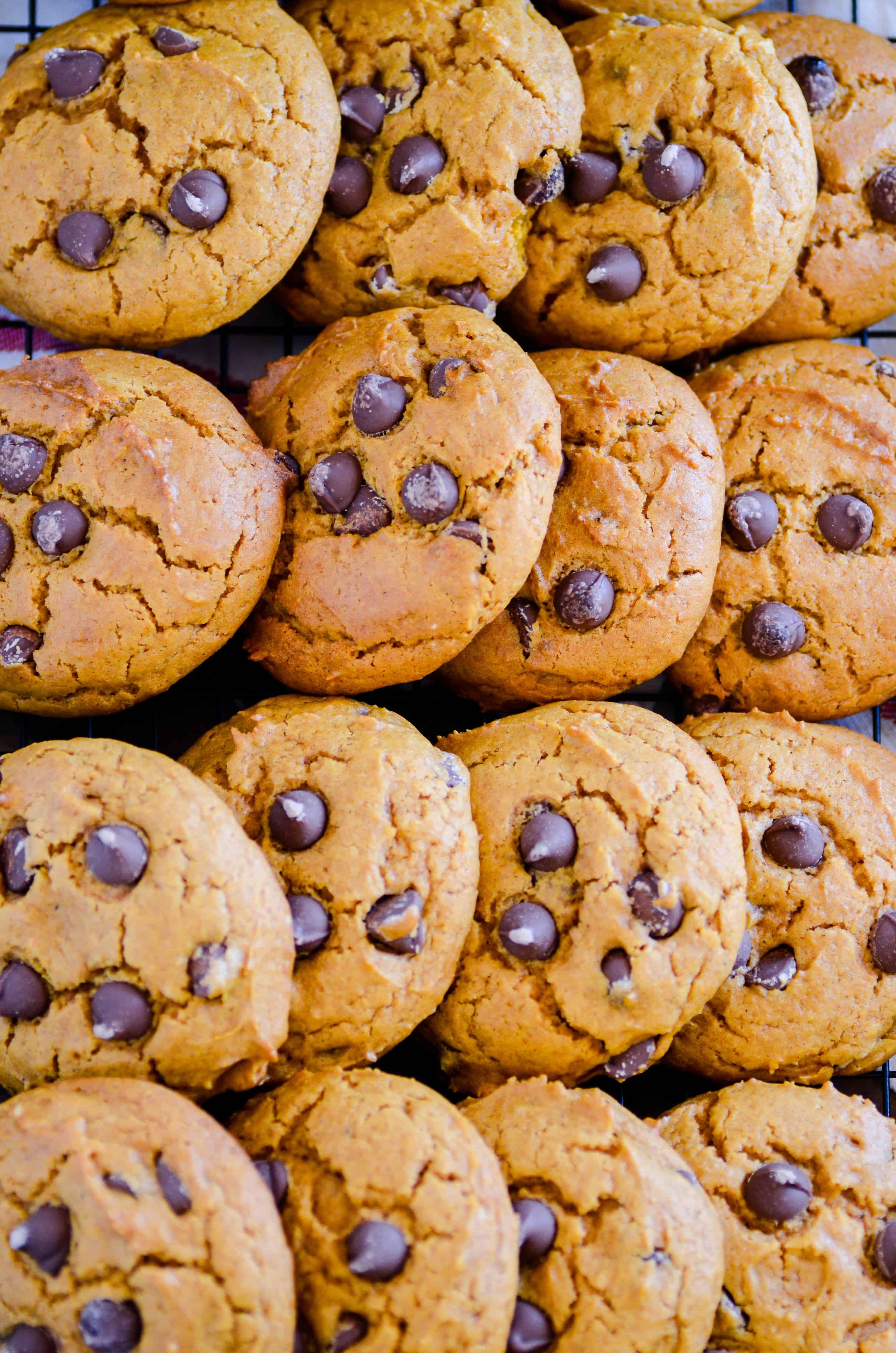 Classic Pumpkin Chocolate Chip Cookies